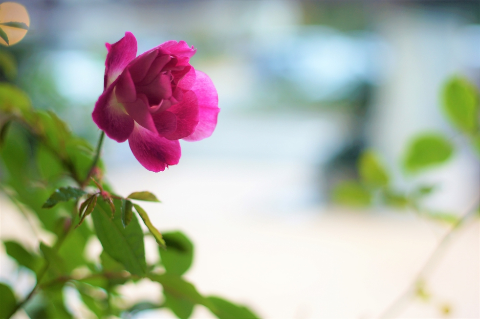 リゾラテラス天草の花1