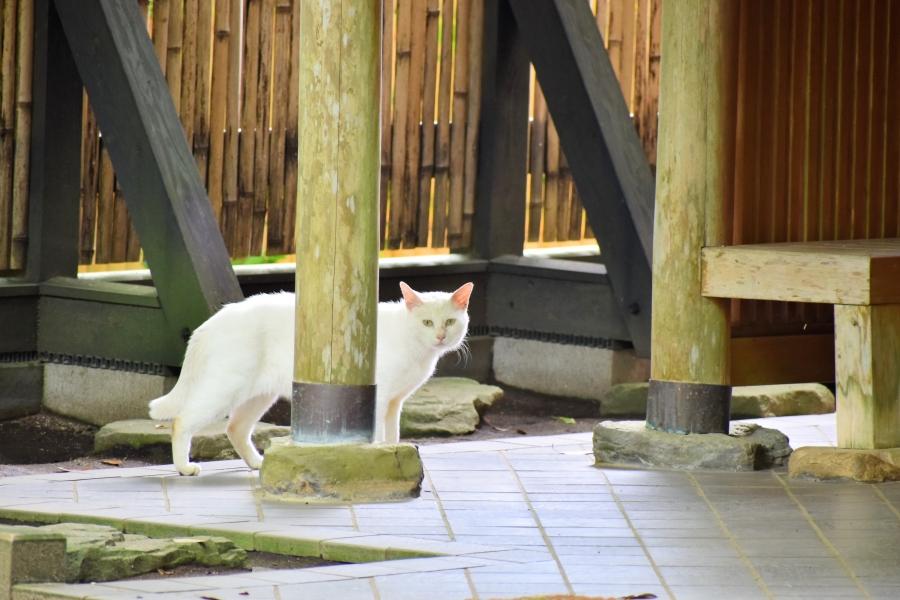 立田自然公園 猫