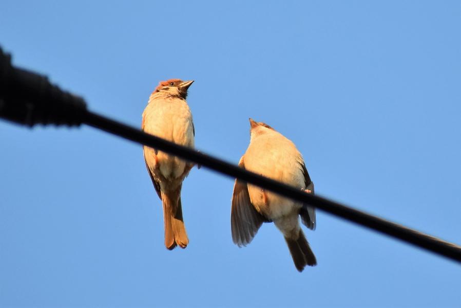 鳥さんシリーズ♪