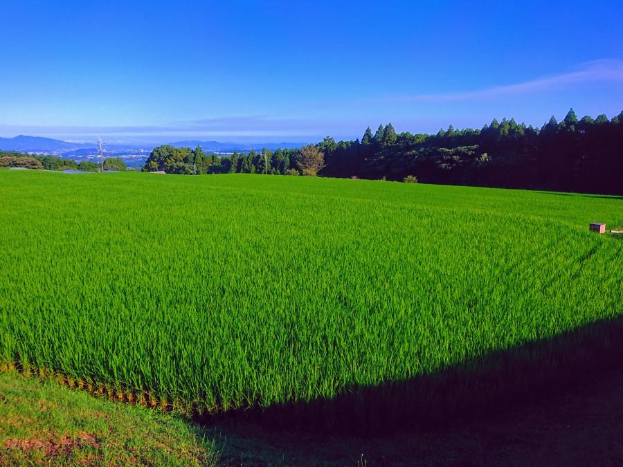 青い空と田んぼと森と