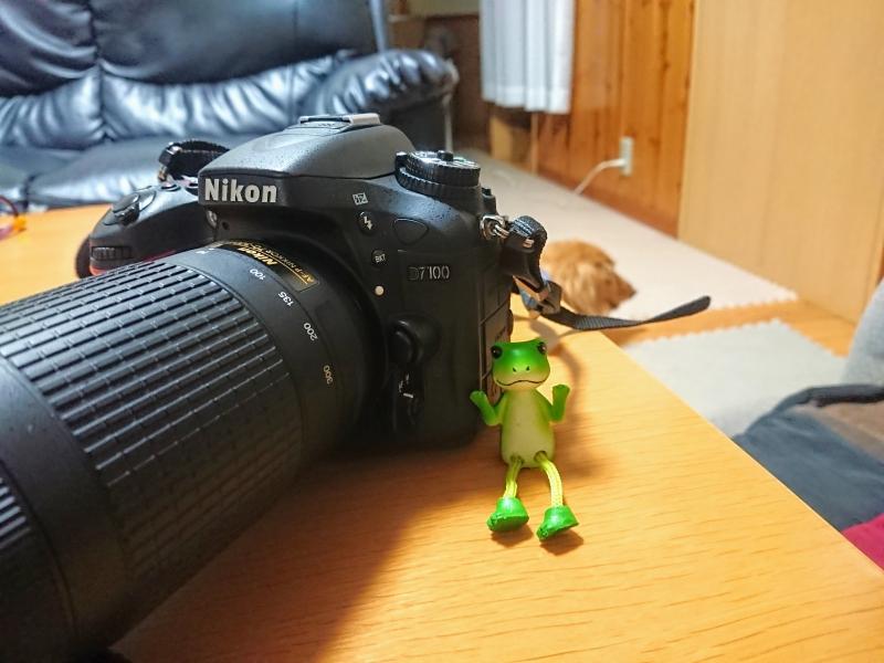 中古の一眼レフカメラ(Nikon D7100)を買ってみました