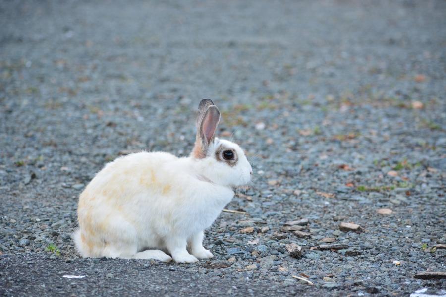 山鹿どんぐり村 ウサギさん