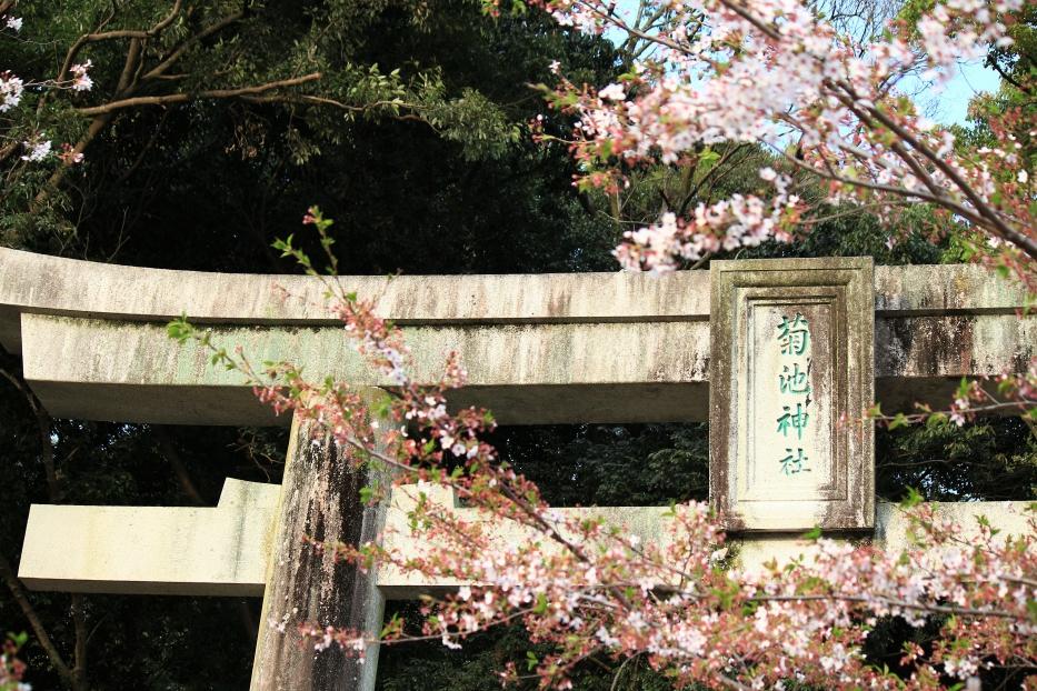 菊池神社 鳥居