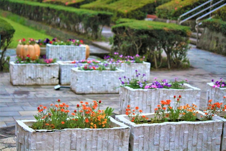 熊本テクノリサーチパーク 小さな花たち