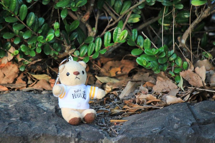 浮島水辺公園 ぬいぐるみ