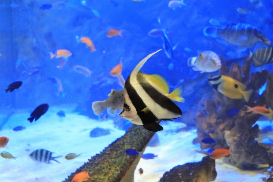 わくわく海中水族館 シードーナツ ダックス そら 熊本県上天草市松島町